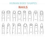 Human fingernail types Vector illustration