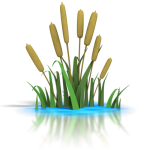 cattails (plants) in water