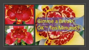 Infographic -Gimme a Break - OK - 10 minutes red and yellow flowers in background My Persuasive Presentations, LLC